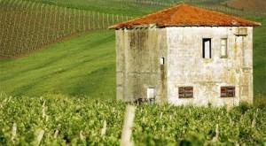 I vini tipici della Sicilia